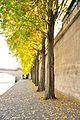 Trees along the Seine (6285210106).jpg