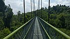Treetop Walk in MacRitchie Nature Trail, Singapore.jpg