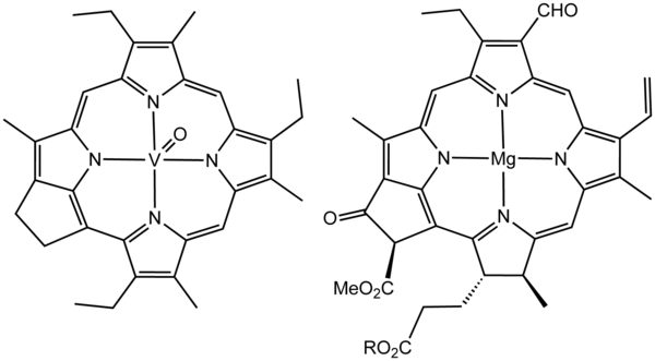 Structure of a vanadium porphyrin compound (left) extracted from petroleum by Alfred E. Treibs, father of organic geochemistry. Treibs noted the close structural similarity of this molecule and chlorophyll a (right). Treibs&Chlorophyll.png