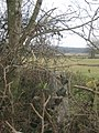 Trig Point in Hedge beside the Vanguard Way - geograph.org.uk - 1755543.jpg