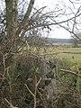 Trig Point in Hedge beside the Vanguard Way - geograph.org.uk - 1755543.jpg