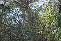 Tumacacori NHS DSC 0836 (15483873358).jpg