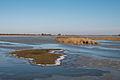 UItzicht vanuit de vogelkijkhut bij de Ezumakeeg.jpg