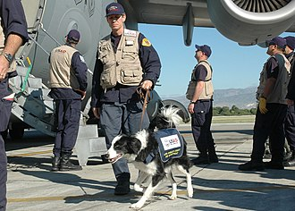 Office of Foreign Disaster Assistance - Canine search working for USAID/OFDA on their way to Haiti to conduct rescue operation after the 2010 Haiti earthquake.