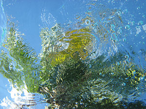English: An underwater shot looking up at a pa...
