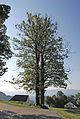 Unterfresen Hausbäume vlg Jokabauer.jpg