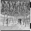 Vårfiske på Vardø - L0049 770Fo30141609280079.jpg