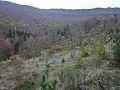 Valbelle (04) reboisement de la montagne de Lure.jpg