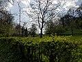 Valkenburg, Sibbergrubbe, voorjaar 2017 07.jpg