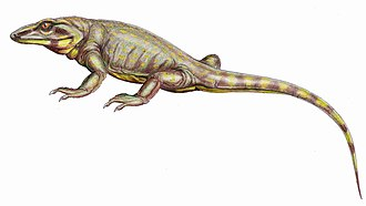 "Reptile - Phylogenetic classifications group the traditional ""mammal-like reptiles"", like this Varanodon, with other synapsids, not with extant reptiles."