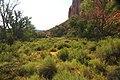 Vegetation in Fremont River Valley, Fremont Petroglyphs Cliff area, Capitol Reef National Park, southern Utah 1 (8445593880).jpg