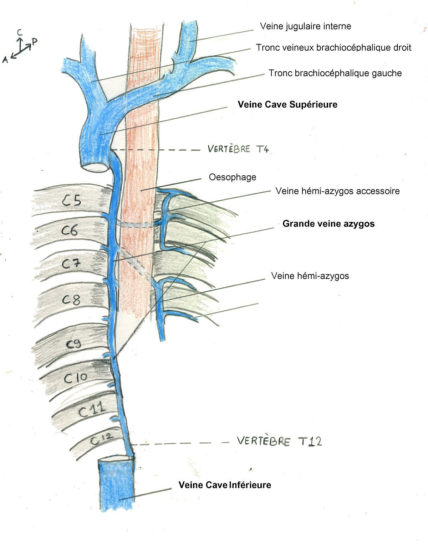Le massage du service de poitrine de lépine dorsale en étant assis vidéo