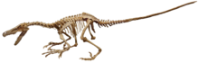 Velociraptor fruita 1 (white background).png