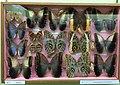 Verzameling Uilvlinders.jpg