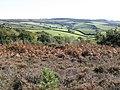 View towards Little Haldon - geograph.org.uk - 1533011.jpg