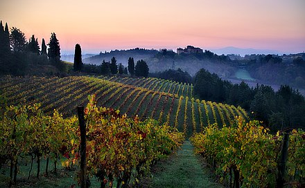 Vineyards in the Chianti region, Tuscany. The Italian food industry is well known for the high quality and variety of its products. Vineyards in Tuscany quality image.jpg