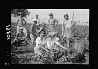 Vintage activities at Richon-le-Zion, Aug. 1939. Group of grape pickers (showing Supernumerary Police) LOC matpc.19752.jpg