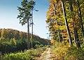 Waldweg07.jpg
