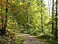 Waldweg zwischen Esslingen und Strümpfelbach - panoramio.jpg