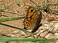 Wall Brown (32978469173).jpg