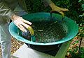 WasserKlangschale 2013-09.jpg