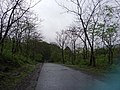 Way to kanheri caves borivali in side national park.jpg