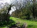 Wayfarer's Walk south of Shere Copse - geograph.org.uk - 1270757.jpg