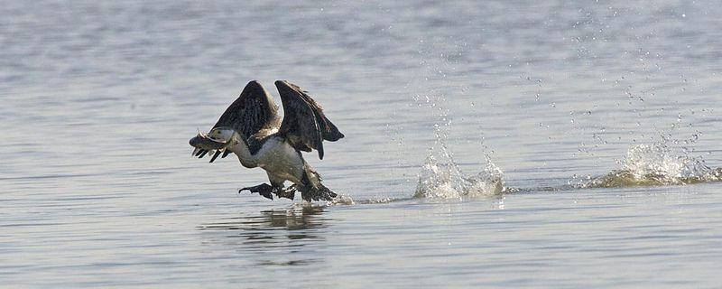 File:We have takeoff - Flickr - Lip Kee.jpg