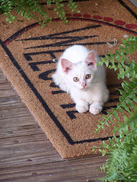 File:Welcome kitty.JPG