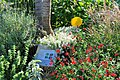 Wikipedia 13. Fotoworkshop Botanischer Garten Erlangen 2013 by-RaBoe 153.jpg