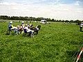 Wildpferde Dülmen 2010 2.jpg