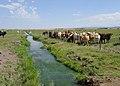 Willow creek ranch california.jpg
