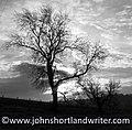 Winter Tree (29080373126).jpg