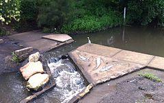 wolli creek regional park