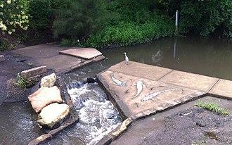Wolli Creek - Image: Wolli Creek Fish Ladder