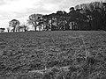 Woodland edge - geograph.org.uk - 728258.jpg