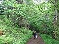 Woodland near Galmisdale - geograph.org.uk - 475990.jpg