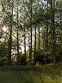 Woodland next to Machany Water - geograph.org.uk - 204552.jpg