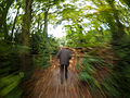 Woodland walk (10493527044).jpg