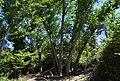 Xops al barranc del Poble, Benimarfull.jpg