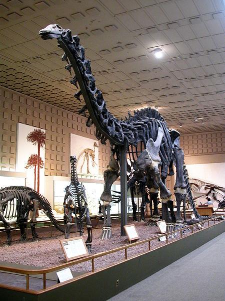 File:Yale brontosaurus.jpg