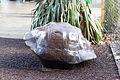 ZSL London - Giant Tortoise shell (01).jpg