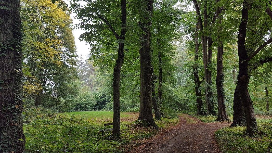 Paden op de heuvel Sint-Jansberg in het bosdomein Sint-Jansberg, Zelem, Halen, Limburg, België