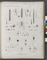 Zoologie. Myriapodes (et Hexapodes-Aptères). Scolopendres, Lépismes (NYPL b14212718-1268572).tiff