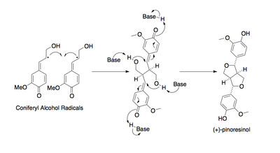 Reaction of monolignol radicals in the presence of dirigent protein to form (+)-pinoresinol