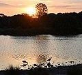 (1)Centennial Park sunset-4aa.jpg