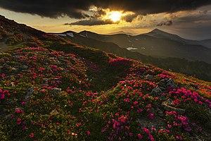 Вечірня краса Карпат.jpg