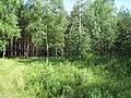 В лесу - panoramio (2).jpg