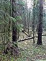 В лесу - panoramio (5).jpg