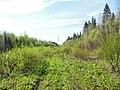 Дорога вдоль ЛЭП за заводом 777, конец мая 2013 - panoramio (4).jpg